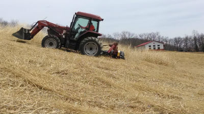 Switchgrass mowing